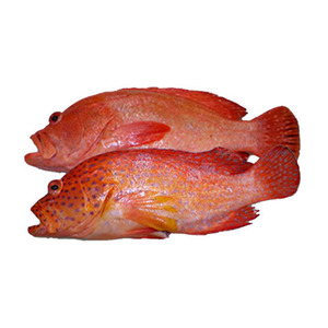 Fresh Red Hamour 1kg Approx. Weight