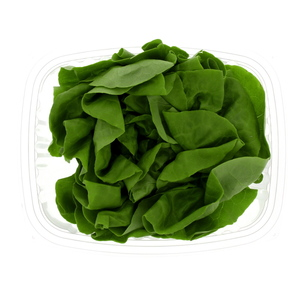 Holland Lettuce Boston 200g Approx. Weight