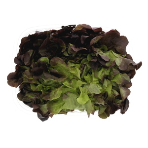 Holland Lettuce Oakleaf 200g Approx. Weight