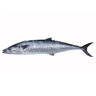 King Fish Small 2kg Approx. Weight