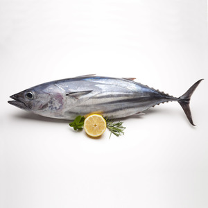 Fresh Tuna Fish Small 1kg Approx. Weight