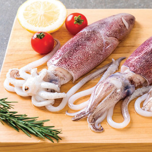 Fresh Squid Whole 10/20 500g Approx weight
