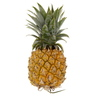 Baby Pineapple 1pc
