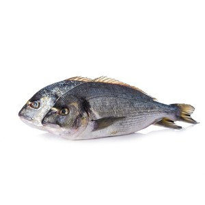 Black Seabream 1kg Approx weight