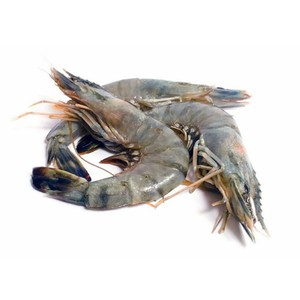 Fresh Sea Prawns Large 500g Approx. Weight